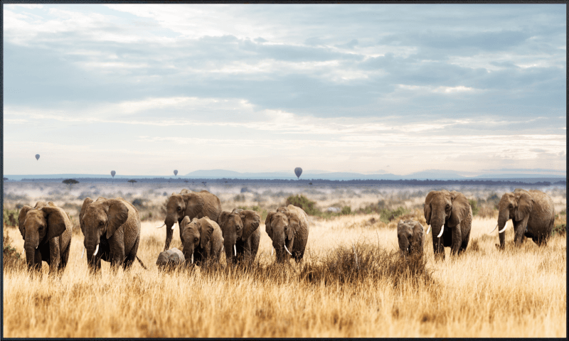 Elefantenherde Motiv - 002