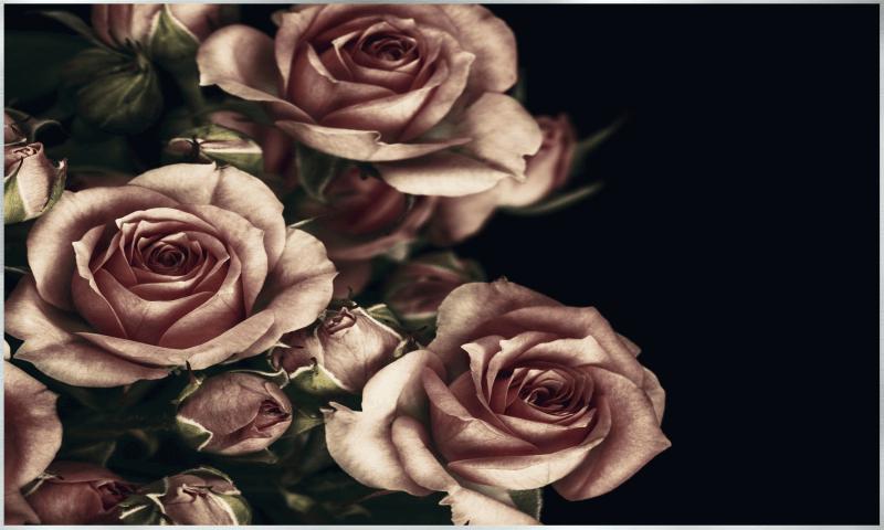 Rosenbild Motiv - 007