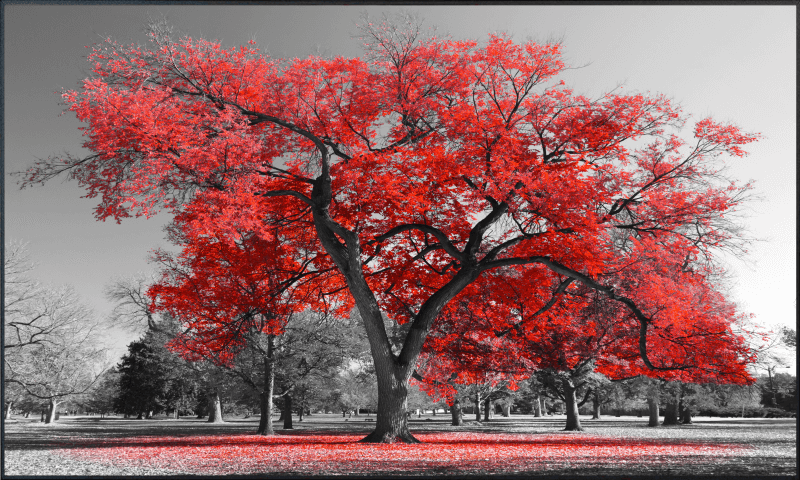 Roter Baum Motiv 010