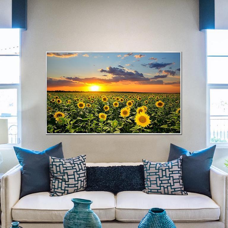 Sonnenblumenfeld 19