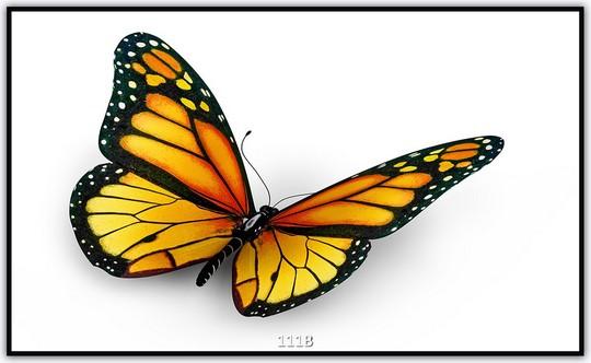 Schmetterling 111