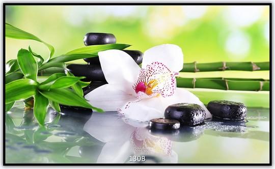 Orchidee 130