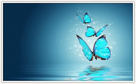 Schmetterlinge 114