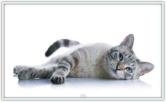 Katze 80